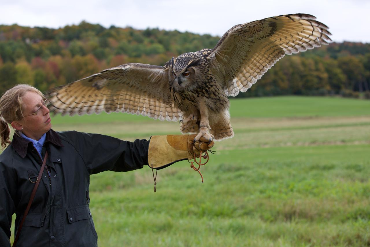 Falconry The Woodstock Inn And Resort